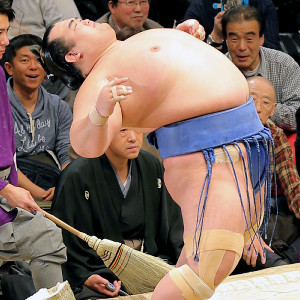 Kotosyougiku2
