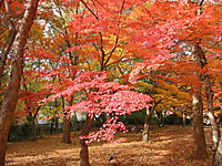 Shinrinkouen